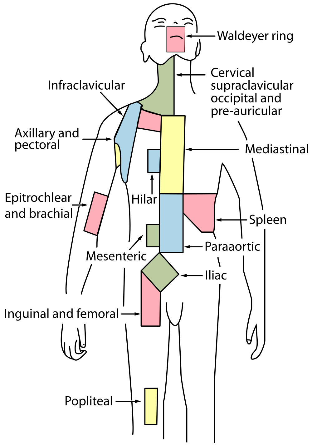 Лимфоузлы на теле схема расположения